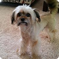 Adopt A Pet :: Gizmo - Aurora, IL