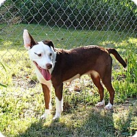 Adopt A Pet :: Lydia - North Wilkesboro, NC