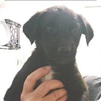 Adopt A Pet :: Sammy - Williams Lake, BC