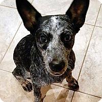 Adopt A Pet :: Sparky - Adopted! - San Diego, CA