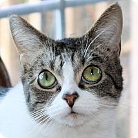 Adopt A Pet :: Nelly - Morganton, NC