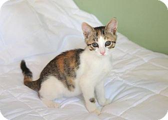 Calico Cat for adoption in Savannah, Georgia - Emily