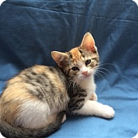 Adopt A Pet :: Luna - Burlington, WA