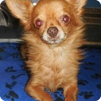 Adopt A Pet :: Pearly - Mesa, AZ