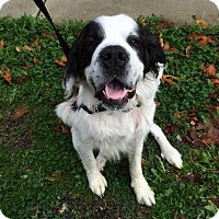 Dogs For Sale Bellingham Wa