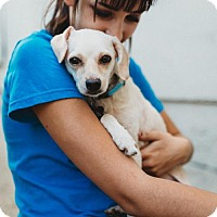 Adopt A Pet :: Catarina - Claremont - Chino Hills, CA