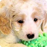 Adopt A Pet :: TYLER(OUR