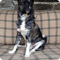 Adopt A Pet :: Maxx - Armonk, NY