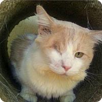 Adopt A Pet :: Ryder - Sarasota, FL
