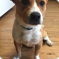 Adopt A Pet :: America - New Oxford, PA