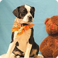 Adopt A Pet :: MELANI - Poteau, OK