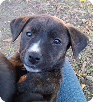 Jessie | Adopted Puppy | LCAS13-0322b | Williston, FL ...