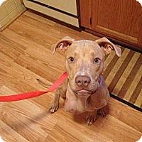 Adopt A Pet :: Wynter - Dearborn, MI