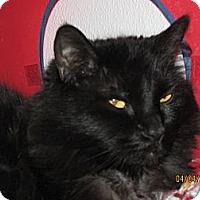 Adopt A Pet :: Charcoal - Colorado Springs, CO