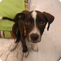 Adopt A Pet :: cadbury - Phoenix, AZ