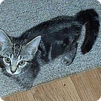 Adopt A Pet :: Alvin - Catasauqua, PA
