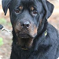 Adopt A Pet :: Jack - Alachua, GA