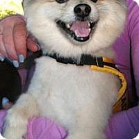 Adopt A Pet :: Teddy - San Francisco, CA