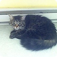 Adopt A Pet :: Zenith - Lancaster, MA