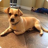 Adopt A Pet :: Duncan - Corona, CA