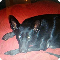 Adopt A Pet :: Raven  (Guest) - Roswell, GA