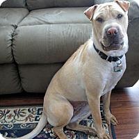 Adopt A Pet :: Carissa in AZ - Mira Loma, CA