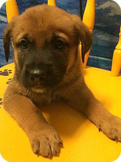 Free Dog Adoptions Orlando