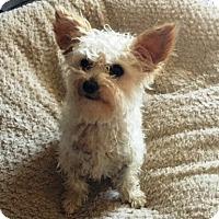 Adopt A Pet :: Roger - Rancho Cucamonga, CA