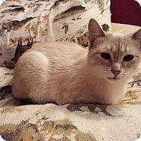 Adopt A Pet :: Sundaee - Fairborn, OH