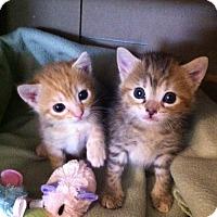 Adopt A Pet :: Glenda - Watkinsville, GA