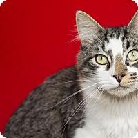 Adopt A Pet :: Pigpen - Los Angeles, CA