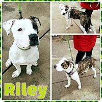 Adopt A Pet :: Riley - Sacramento, CA