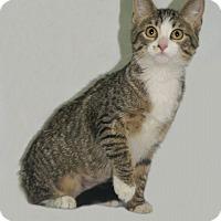 Adopt A Pet :: Cassie - Hawk Point, MO