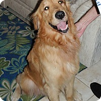 Adopt A Pet :: Duke - Murdock, FL
