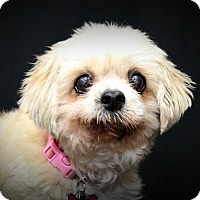Adopt A Pet :: Emma - Toronto, ON