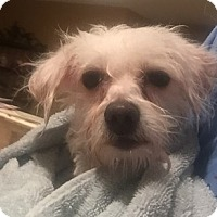Adopt A Pet :: Mojo - Rockaway, NJ