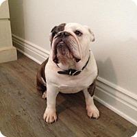 Adopt A Pet :: Botox - Santa Ana, CA