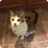Adopt A Pet :: Aurora - Davison, MI
