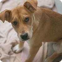 Adopt A Pet :: Cammie - Canoga Park, CA