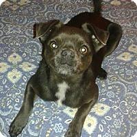 Adopt A Pet :: Dexter - Arlington, TN