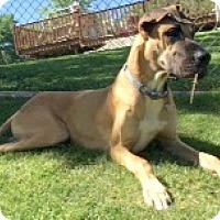 Adopt A Pet :: Hank - O'Fallon, MO