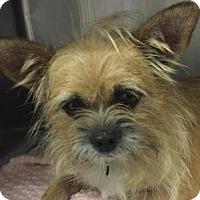 Adopt A Pet :: Socks - Berkeley Heights, NJ