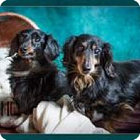 Adopt A Pet :: Frankie and Charlie - Clackamas, OR