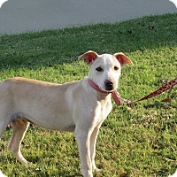 Adopt A Pet :: Petunia - Broken Arrow, OK
