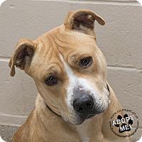 Adopt A Pet :: Sadie - Troy, OH