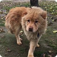 Adopt A Pet :: Bolt - Visalia, CA