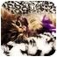 Photo 2 - Domestic Longhair Cat for adoption in Spencer, New York - Zephyr