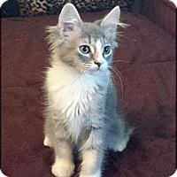 Adopt A Pet :: Nala - Irvine, CA