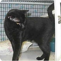 Adopt A Pet :: Lang - Colmar, PA