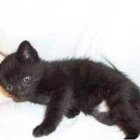 Adopt A Pet :: Coal - Acme, PA